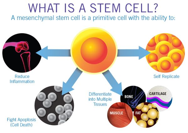 https://www.tricellbio.com/wp-content/uploads/2020/05/Stem-Cell-01.jpeg