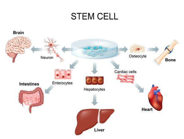 https://www.tricellbio.com/wp-content/uploads/2020/05/Stem-Cells.jpeg