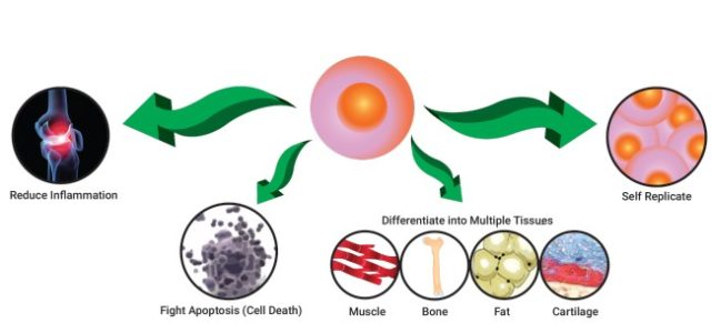 https://www.tricellbio.com/wp-content/uploads/2020/06/What-is-Stem-Cell-Therapy-640x291.jpg