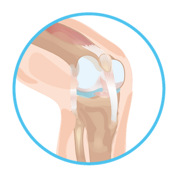 https://www.tricellbio.com/wp-content/uploads/2020/08/Ligament-01-01-1.png